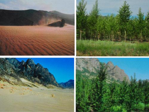 丰田植树治沙前后对比 br图片